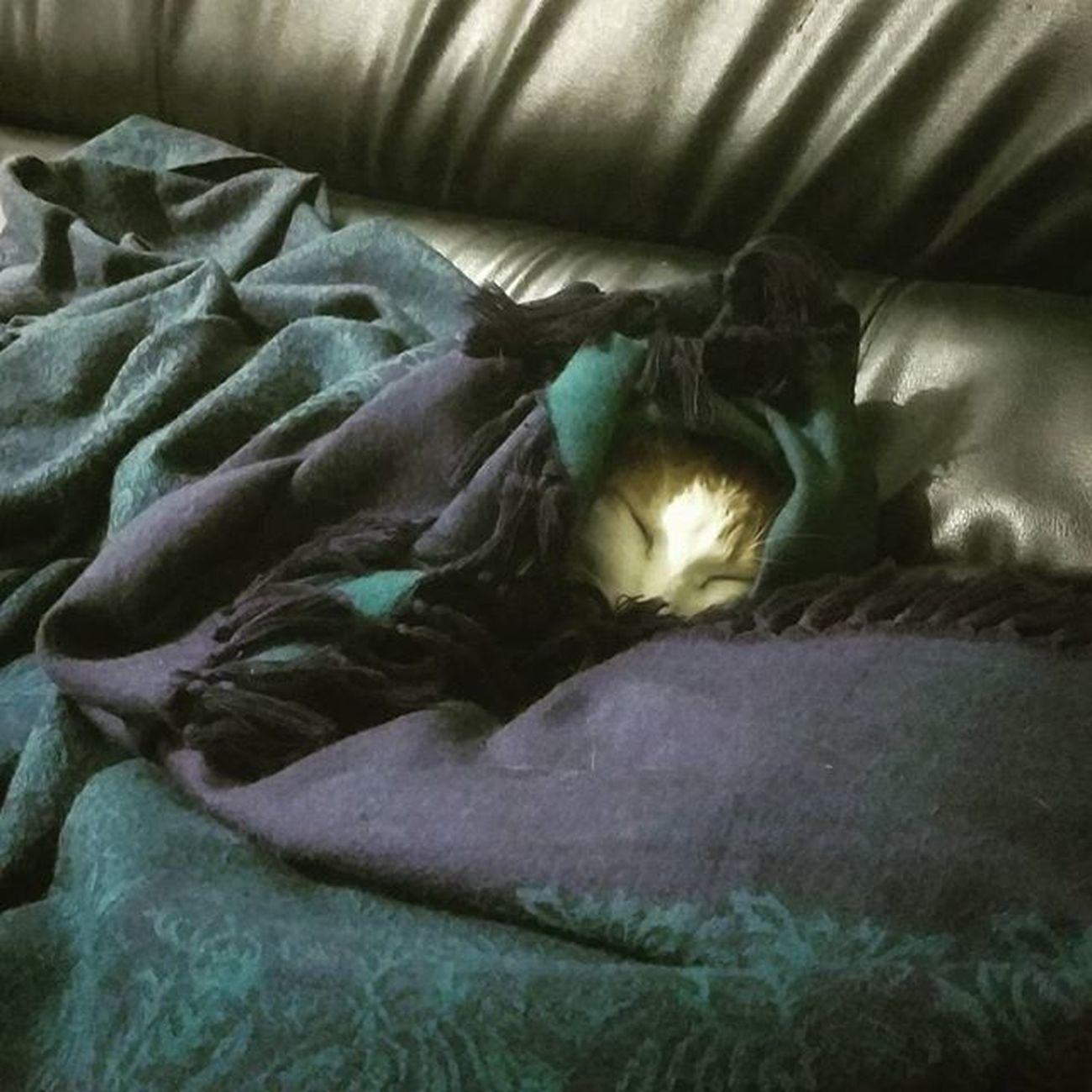 溫暖的貓咪. 小黃