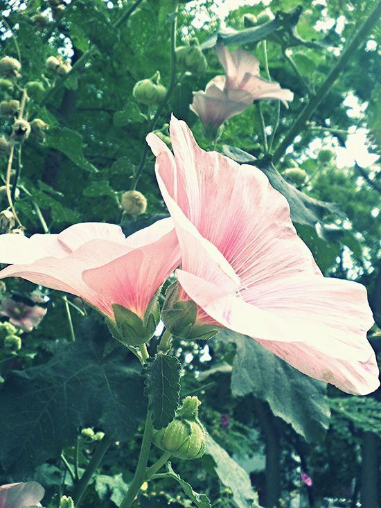 Love Green Amazing Nature Feodosia Beautiful Summer ☀ Plants Pi Pink Flower
