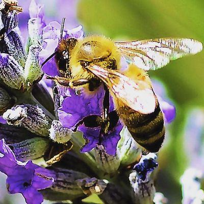 Upon arrival . Bees Wasp Bugslife Nature Insect Exposure Outdoor Flowerstalking Capture Fotographia NatureIsBeautiful Tv_depthoffield Tv_dof Nature Flowers Summer Nature Details Macro Macroworld Macrophotography Picture Beeporn