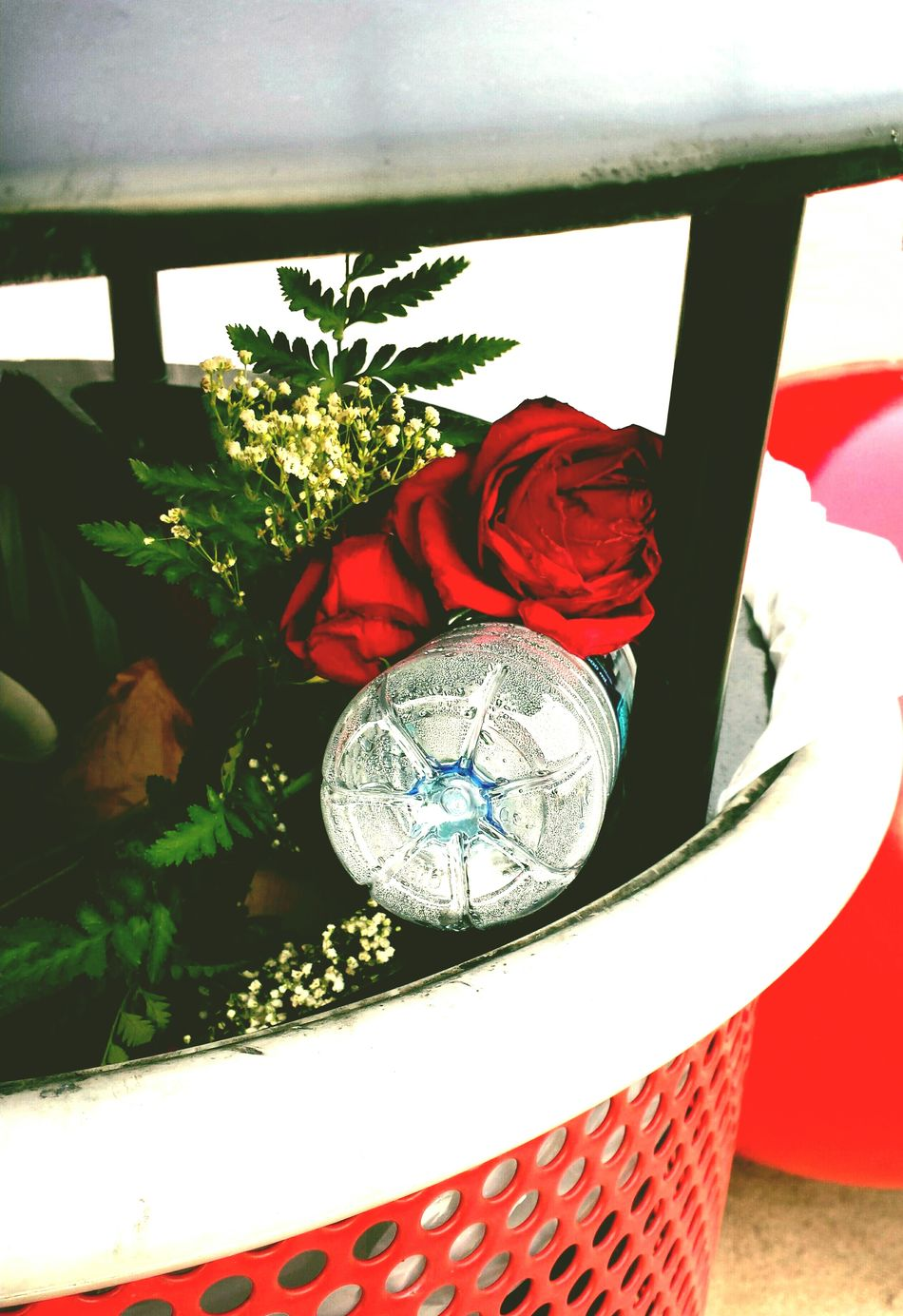 The result of quarreling True Love Roses Garbage Can Beautiful Garbage Relationships Garbage Art Garbage Red Rose Check This Out Trash Photographic Memory The Week On Eyem EyeEm Best Shots - Flowers Eyeem Best Shots - Roses EyeEm Best Shots Quarreling Trash Can Trashcan Trash Can Art