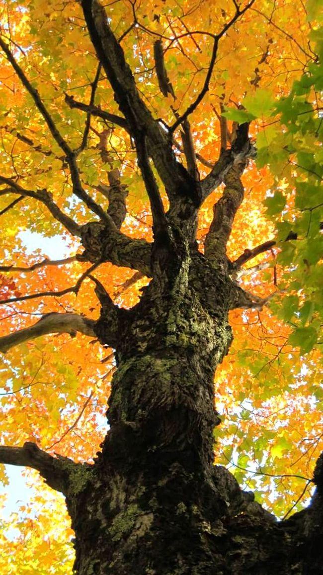 Autumn Montgomeryvermont Nature Hugging A Tree Seasons Colorsonfire Enjoying Life