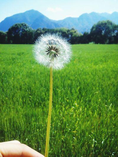 Un deseo he pedido...