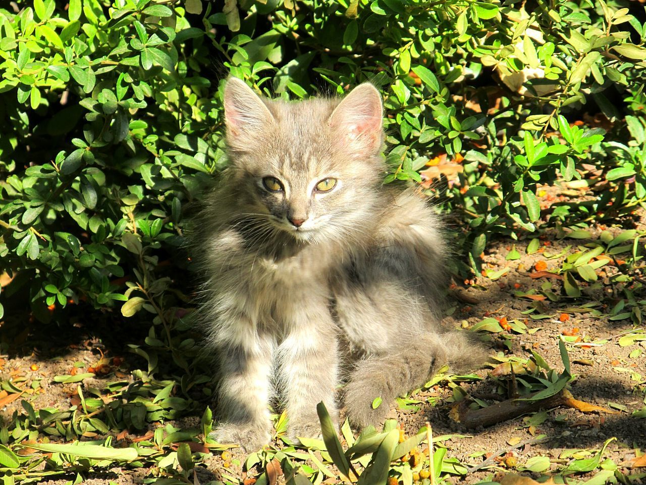 domestic cat, feline, domestic animals, mammal, pets, animal themes, whisker, plant, green color, no people, leaf, day, outdoors, portrait, nature