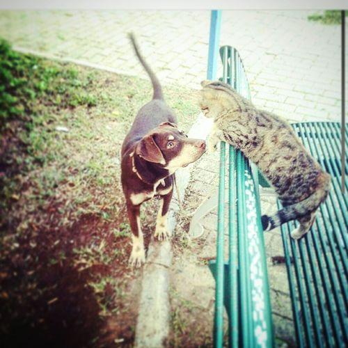 Friendship Karşıyaka Dogandcat 🐈🐶