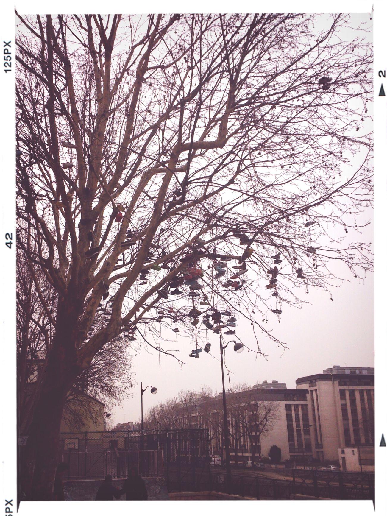 l'arbre à chaussures...