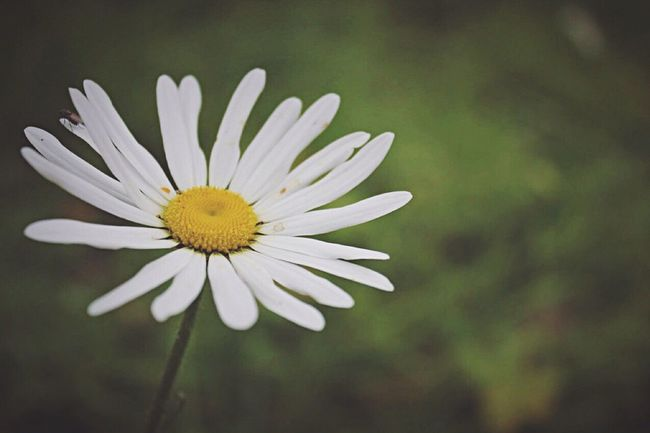 Taking Photos Photography Photographer Peaceful Flowers Flowerporn Summer Summertime Throwback Sunshine Daisy