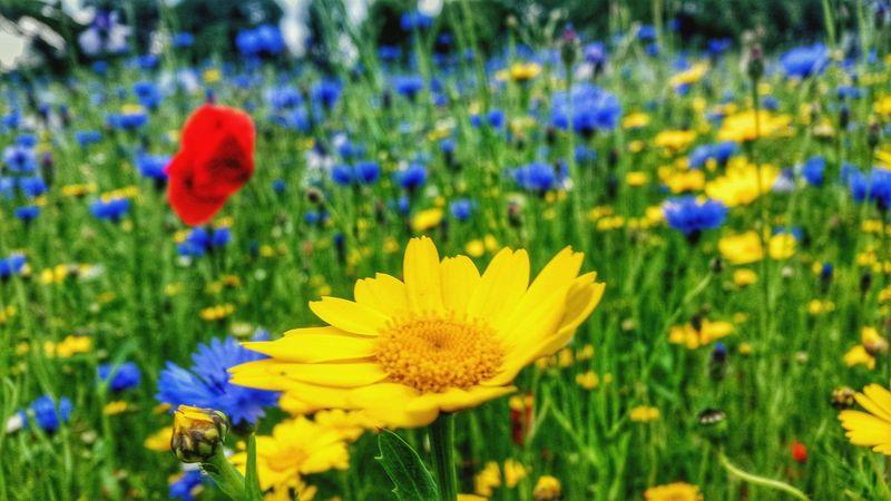 Botanical Gardens Edinburgh Yellow Flowers Mobilephotography Nature Walking Around Beautiful Sunshine ☀