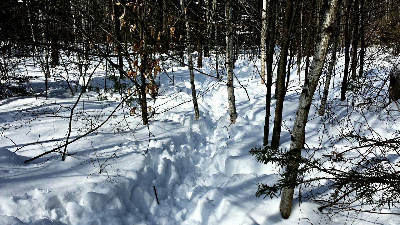 Yardpic Winterwonderland Eye Em Best Shots SNOW!!!! Tracks In Snow Deer Tracks Maine
