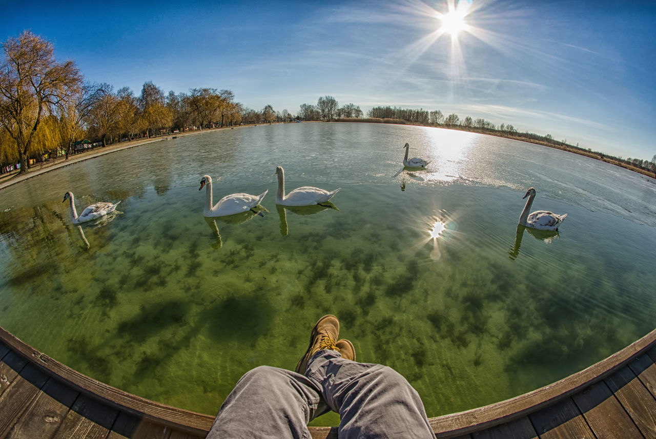 Beach Birds Fisheye Hungary Leg Lights People Plants Sun Sunlight Sunshine Swan Tree Visibility Water Winter