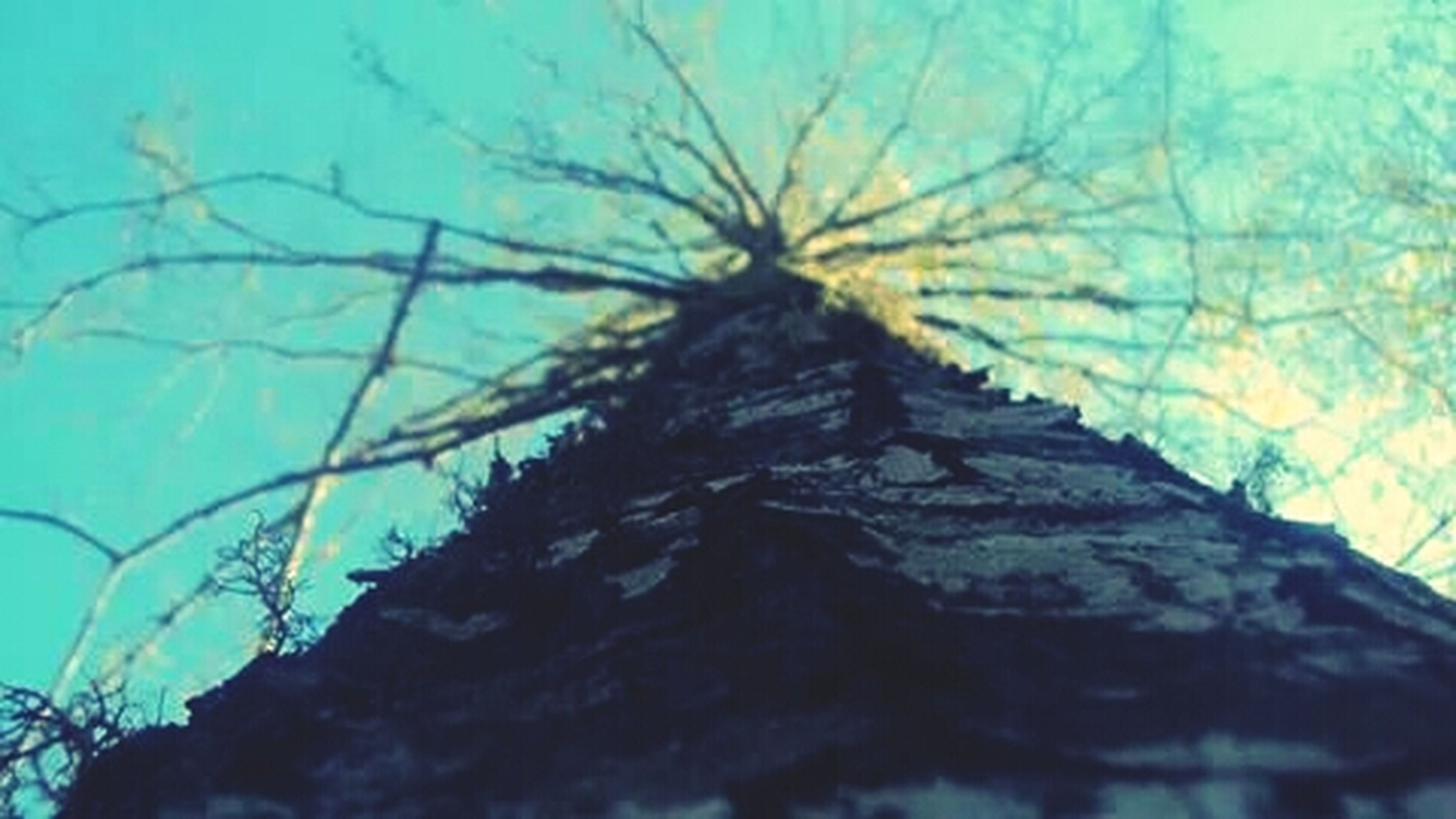low angle view, textured, blue, tree, branch, wall - building feature, close-up, nature, outdoors, tree trunk, pattern, no people, day, growth, wall, built structure, sky, rough, sunlight, weathered