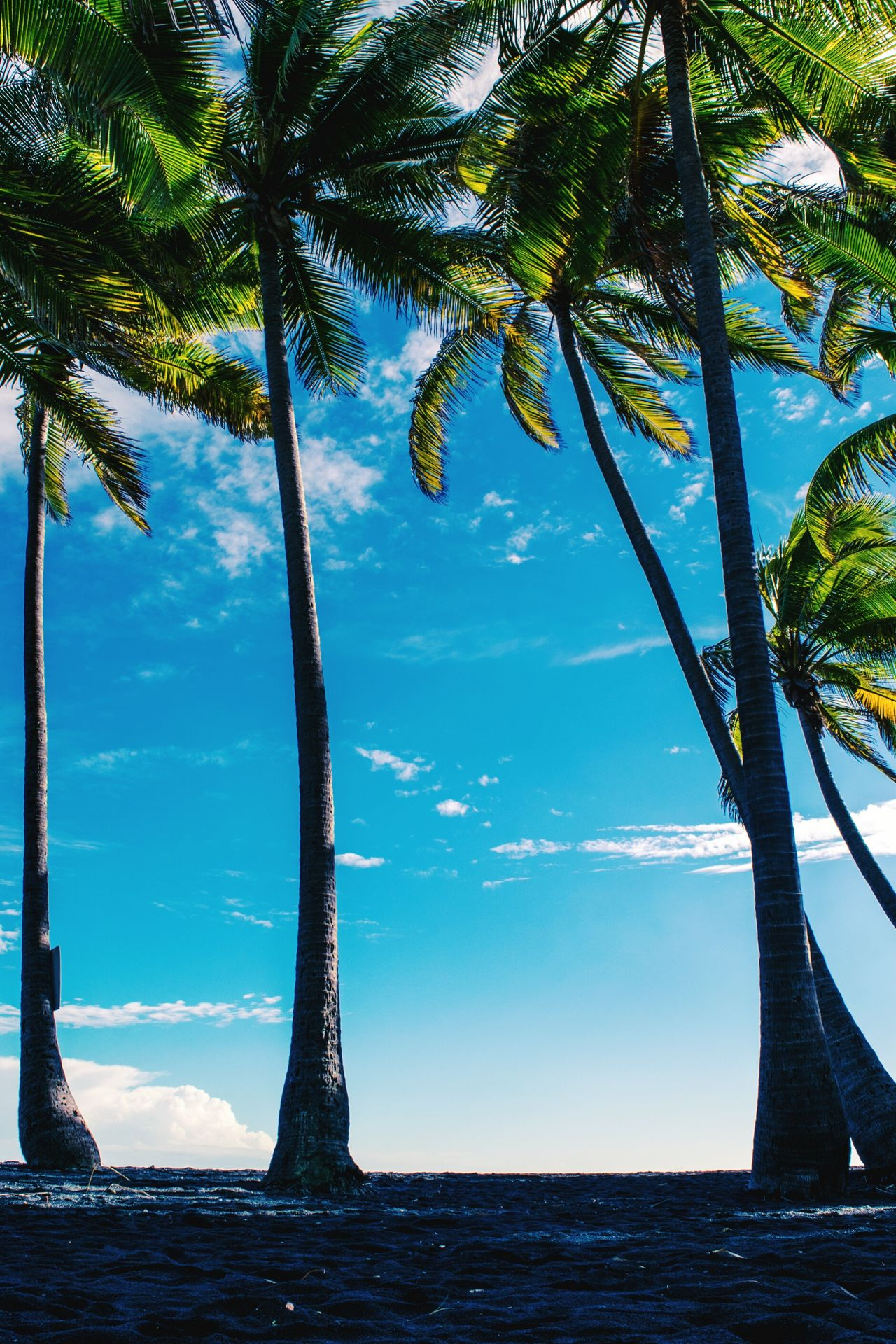 Paradise Tree Nature Blue Sky Beauty In Nature Palm Tree Tropical Climate Landscape Sand Scenics Landscape_photography Hawaii Hawaiishots Big Island Love Big Island Big Island Hawaii From My Point Of View Landscape Photography Landscape_Collection