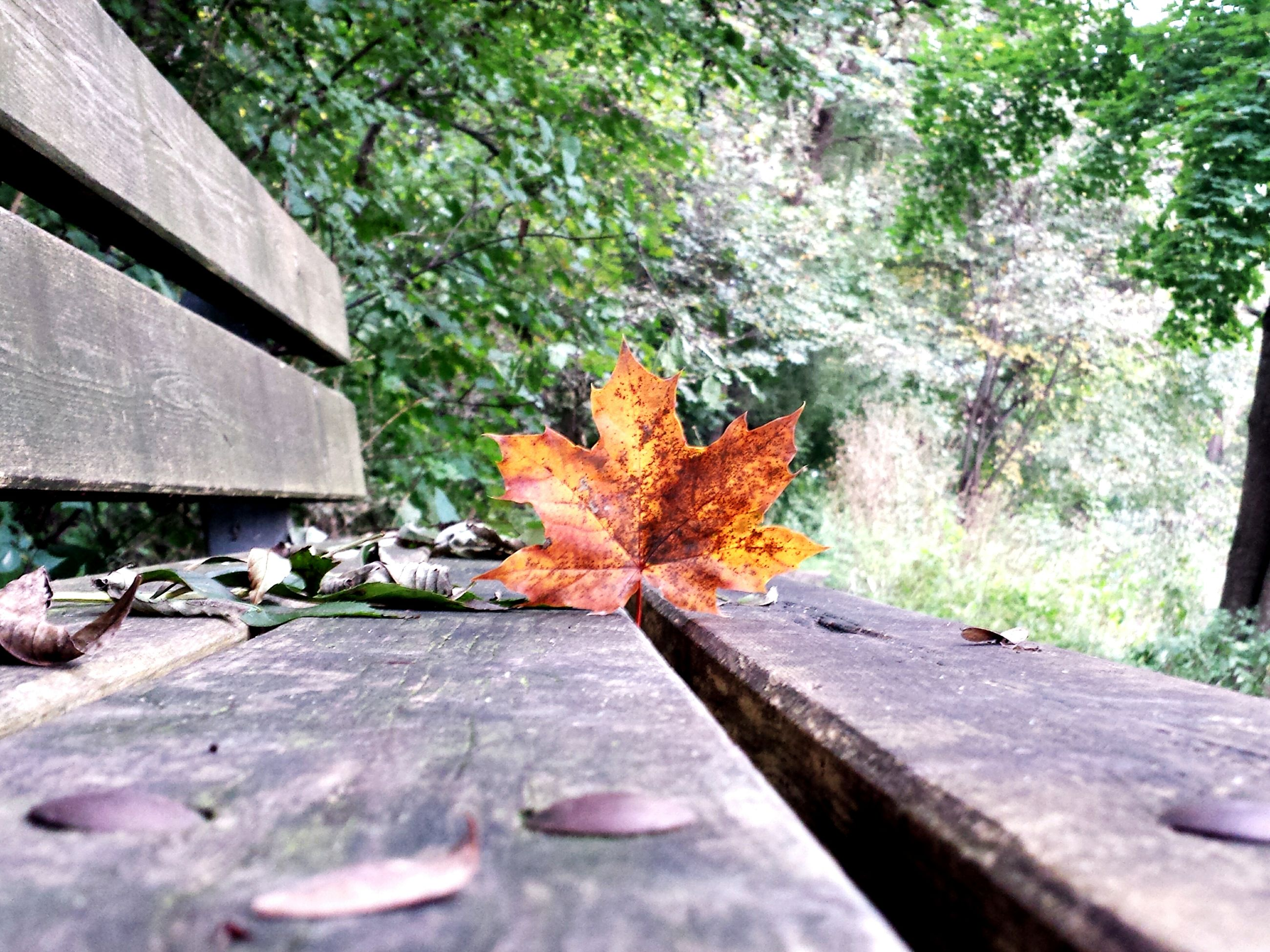 autumn, change, season, orange color, leaf, tree, maple leaf, close-up, nature, tranquility, day, outdoors, growing, beauty in nature, tranquil scene, green, no people, scenics