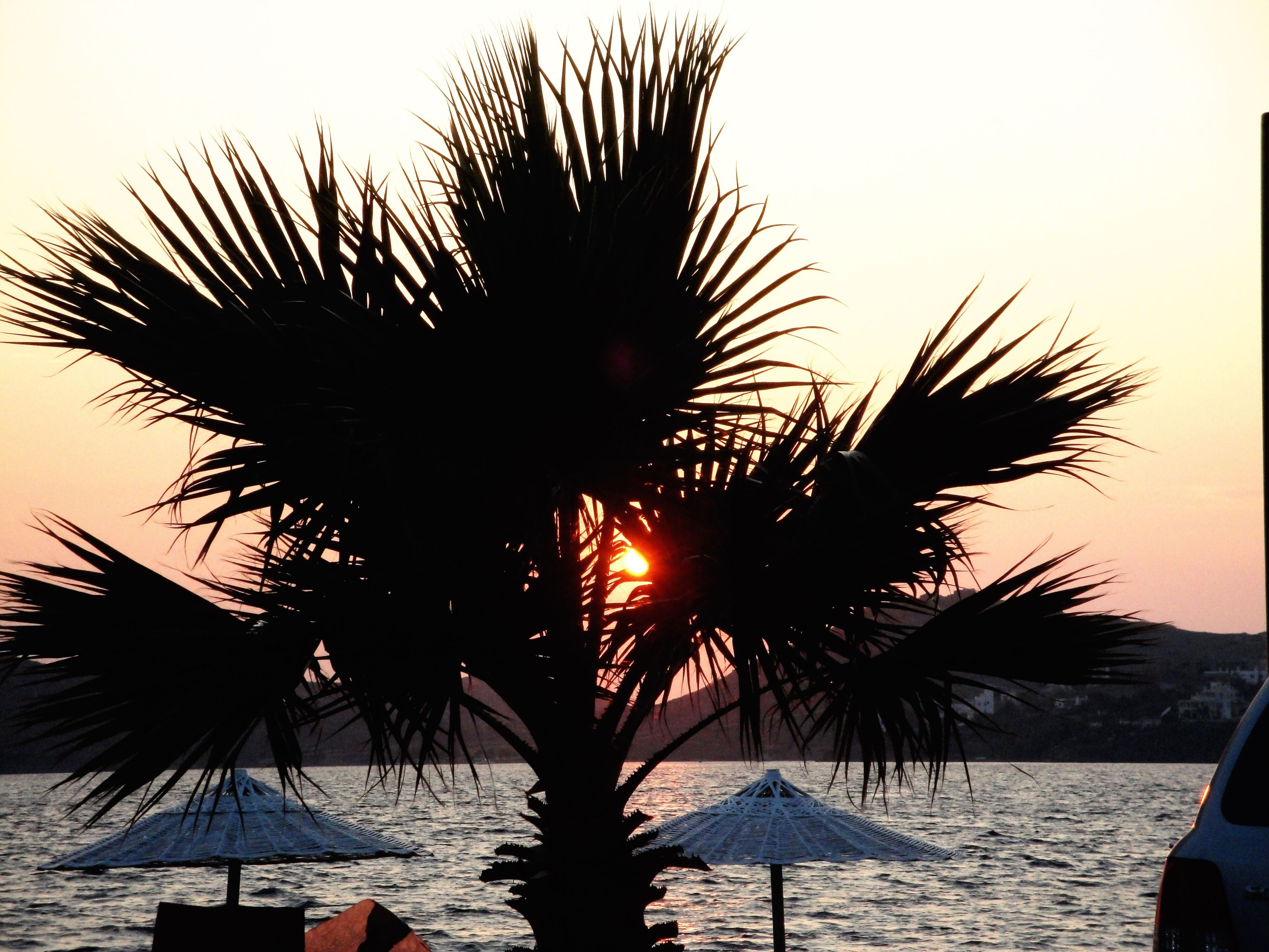 palm tree, beach, outdoors, sea, nature, beauty in nature, scenics, tranquility, no people, vacations, clear sky, water, sky, tree, day