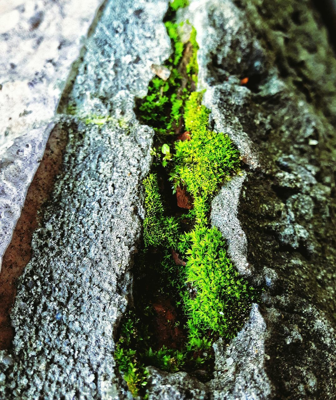 tree trunk, moss, textured, lichen, rough, close-up, bark, tree, growth, day, fungus, nature, no people, outdoors, green color, focus on foreground, beauty in nature, toadstool