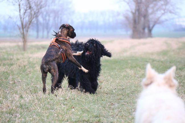 Juno's Gang 😃 Juno's World EyeEm Nature Lover Enjoying Life Dog I Love My Dog