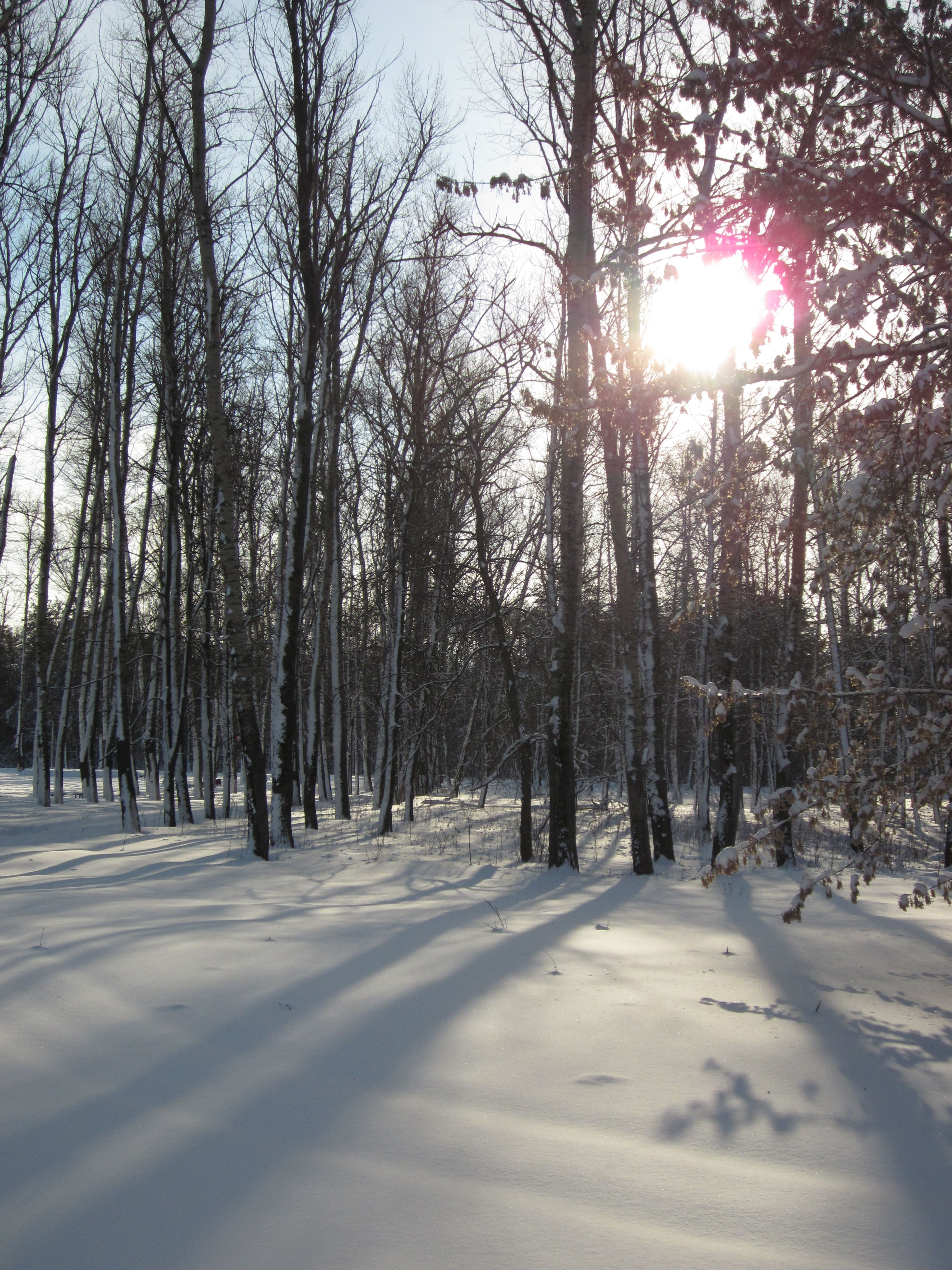 snow, winter, tree, cold temperature, sun, season, sunlight, tranquility, nature, the way forward, bare tree, tranquil scene, sunbeam, beauty in nature, frozen, scenics, covering, weather, lens flare, tree trunk