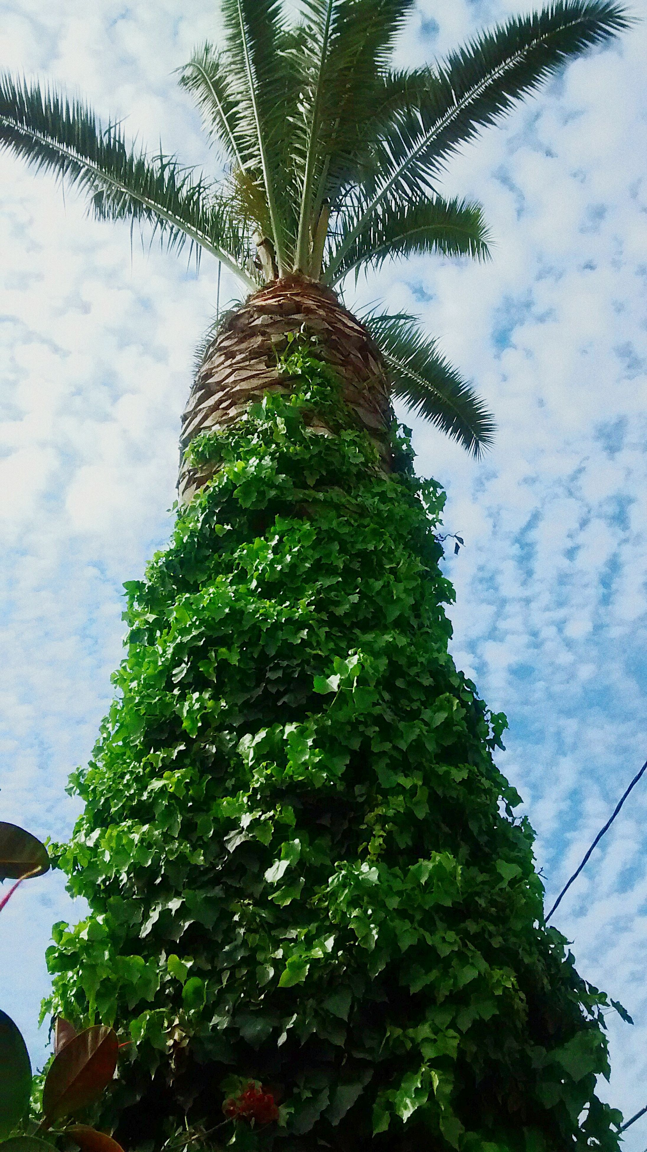 low angle view, tree, growth, sky, green color, branch, leaf, nature, cloud - sky, tree trunk, plant, growing, day, tranquility, beauty in nature, outdoors, no people, cloud, green, ivy