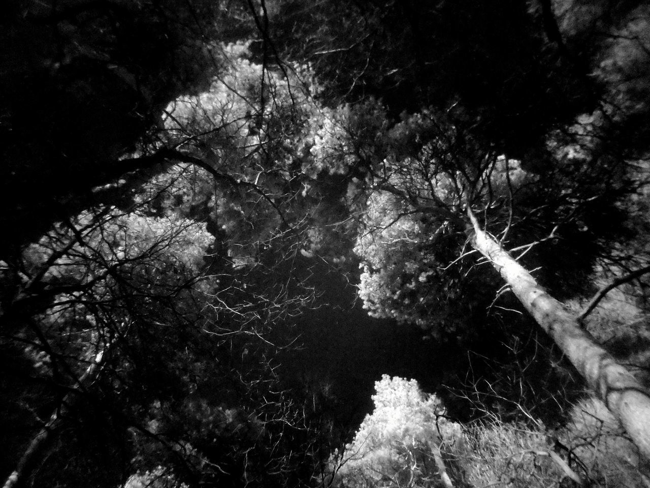 Tree Nature Low Angle View Sky Outdoors Infrared Photo Infra-red Infrared Photography Infrared Infraredphotography Black And White Photography Black & White Black&white Blackandwhite Branch Forest Tranquility Nature Tree Low Angle View Branches Blackandwhite Photography Blackandwhitephotography Complexity