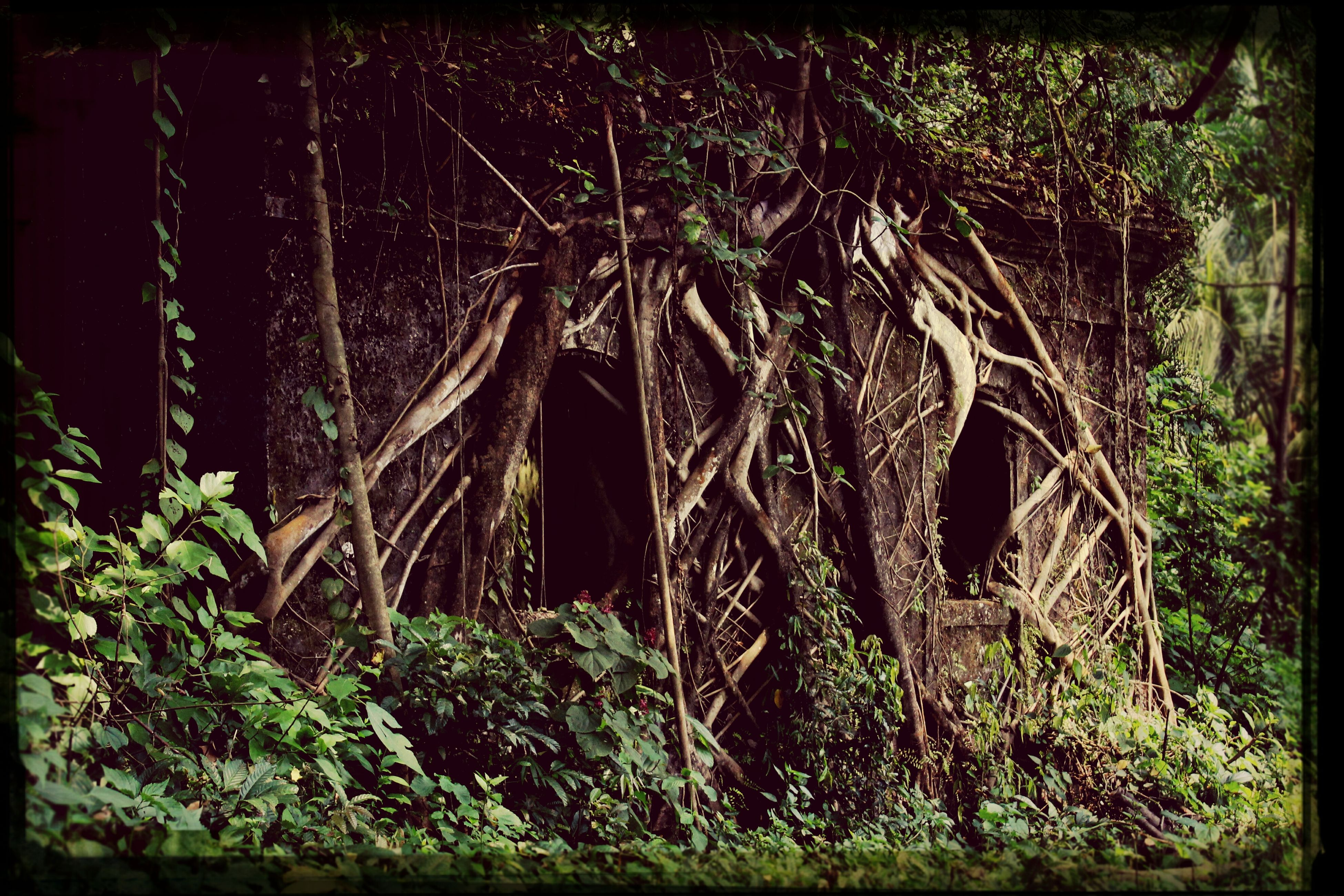 tree, abandoned, damaged, old, obsolete, built structure, run-down, deterioration, growth, forest, plant, architecture, weathered, destruction, branch, auto post production filter, grass, house, nature, outdoors