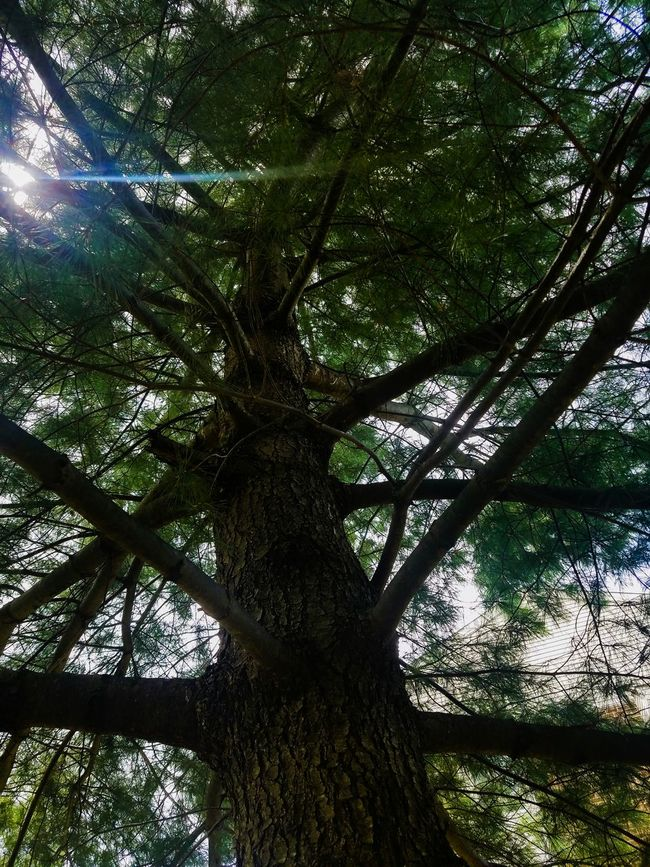 Tree Tree_collection  Tree Porn Tree Branches Treelovers Tree Art Trees And Nature Treescape Treetastic Tree_captures Tree Of Life Treehugger Feel The Journey Treesofgreen Love To Take Photos ❤ Hello World ✌ Touch Of Color Lens Flare