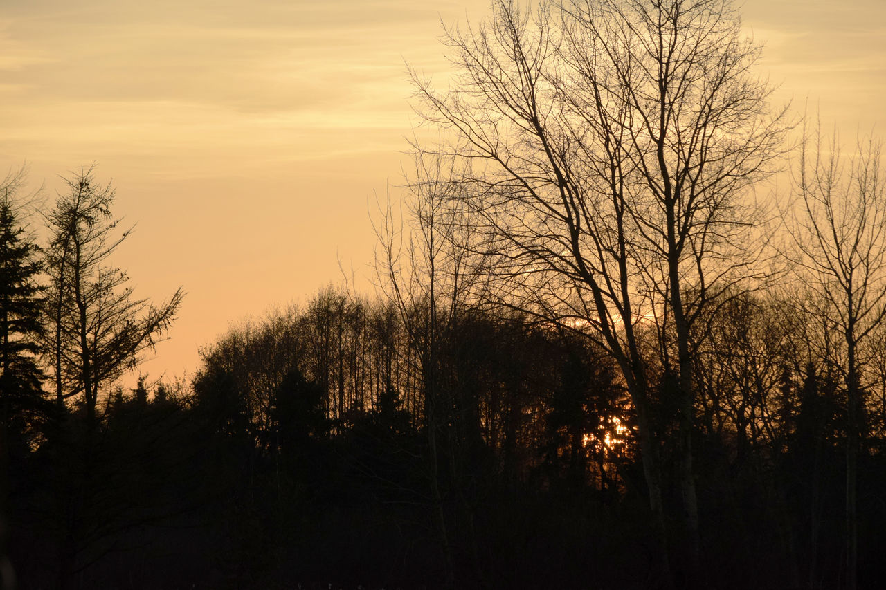 tree, sunset, nature, tranquil scene, tranquility, beauty in nature, scenics, silhouette, no people, outdoors, sky, bare tree, forest, landscape, growth, day