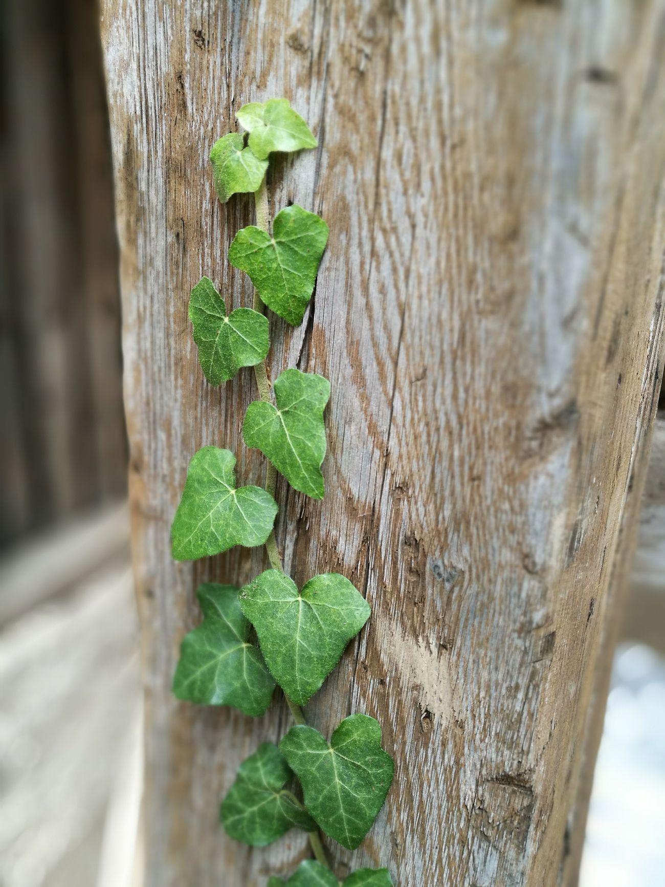Spontan am Hauseingang gefunden. Leaf Green Color Close-up Wood - Material Frenkendorf First Eyeem Photo