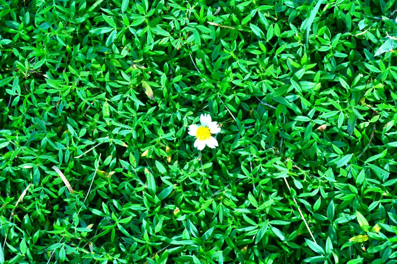 Maximum Closeness Green Color Growth Nature Leaf Beauty In Nature Plant Flower Fragility Freshness Grass No People Field Flower Head Backgrounds Outdoors Day Week Of The Photo