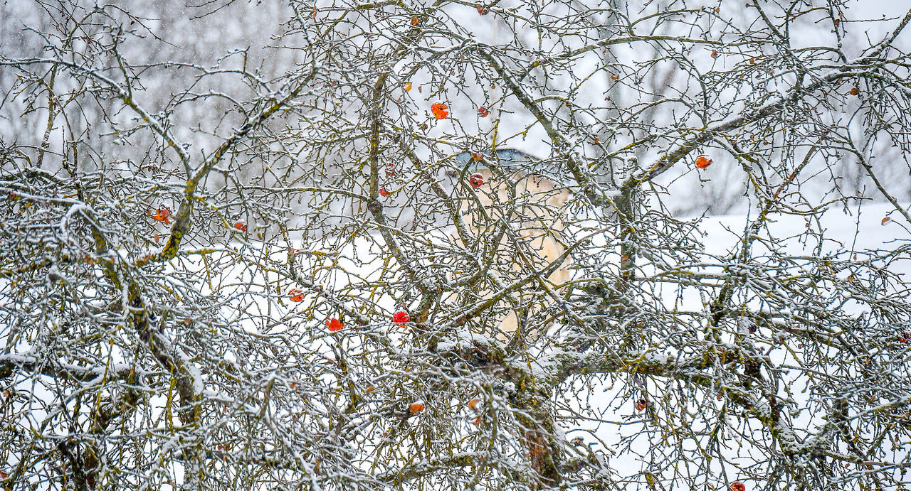 Vilnius Botanical Garden Winter Nature Outdoors Tree