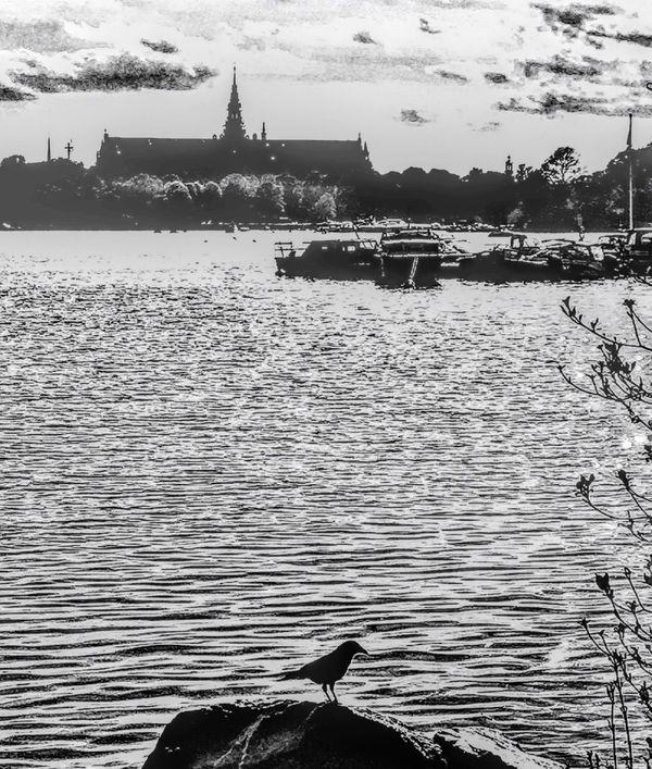Nature Fotografiska EyeEm Best Shots Live Near You Popular Photo Instagram Sweden Stockholm EyeEm The Great Outdoors - 2017 EyeEm Awards