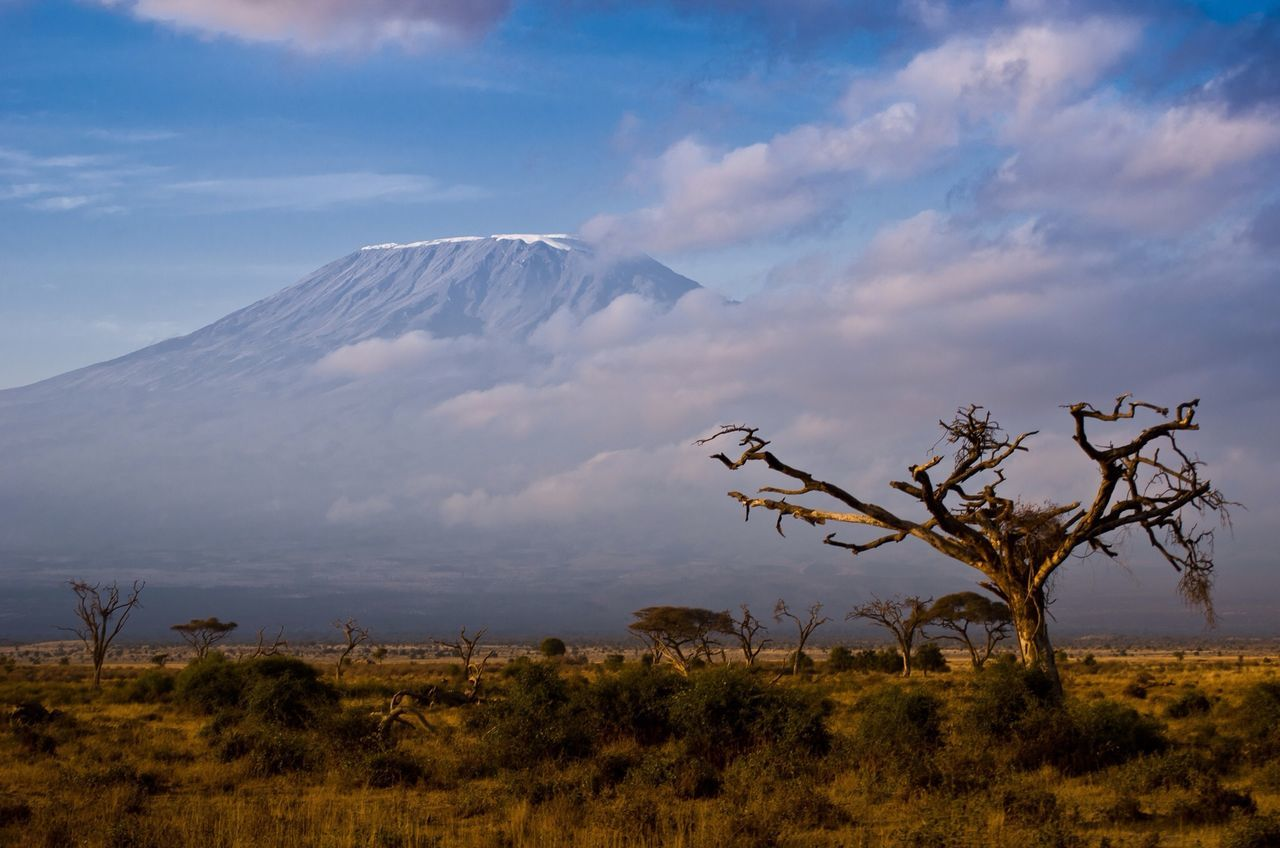 Beautiful stock photos of earth, Amboseli National Park, Bare Tree, Beauty In Nature, Cloud - Sky