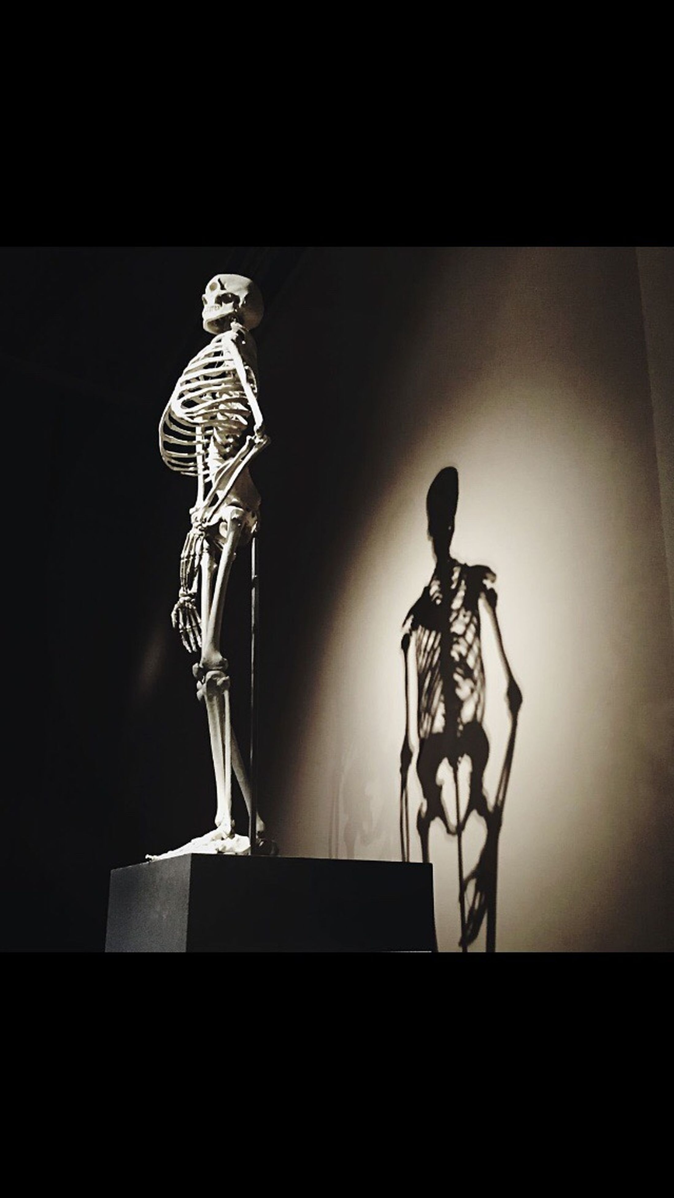 art, art and craft, creativity, human representation, animal representation, indoors, wall - building feature, auto post production filter, low angle view, sculpture, transfer print, no people, built structure, silhouette, statue, wall, copy space, close-up