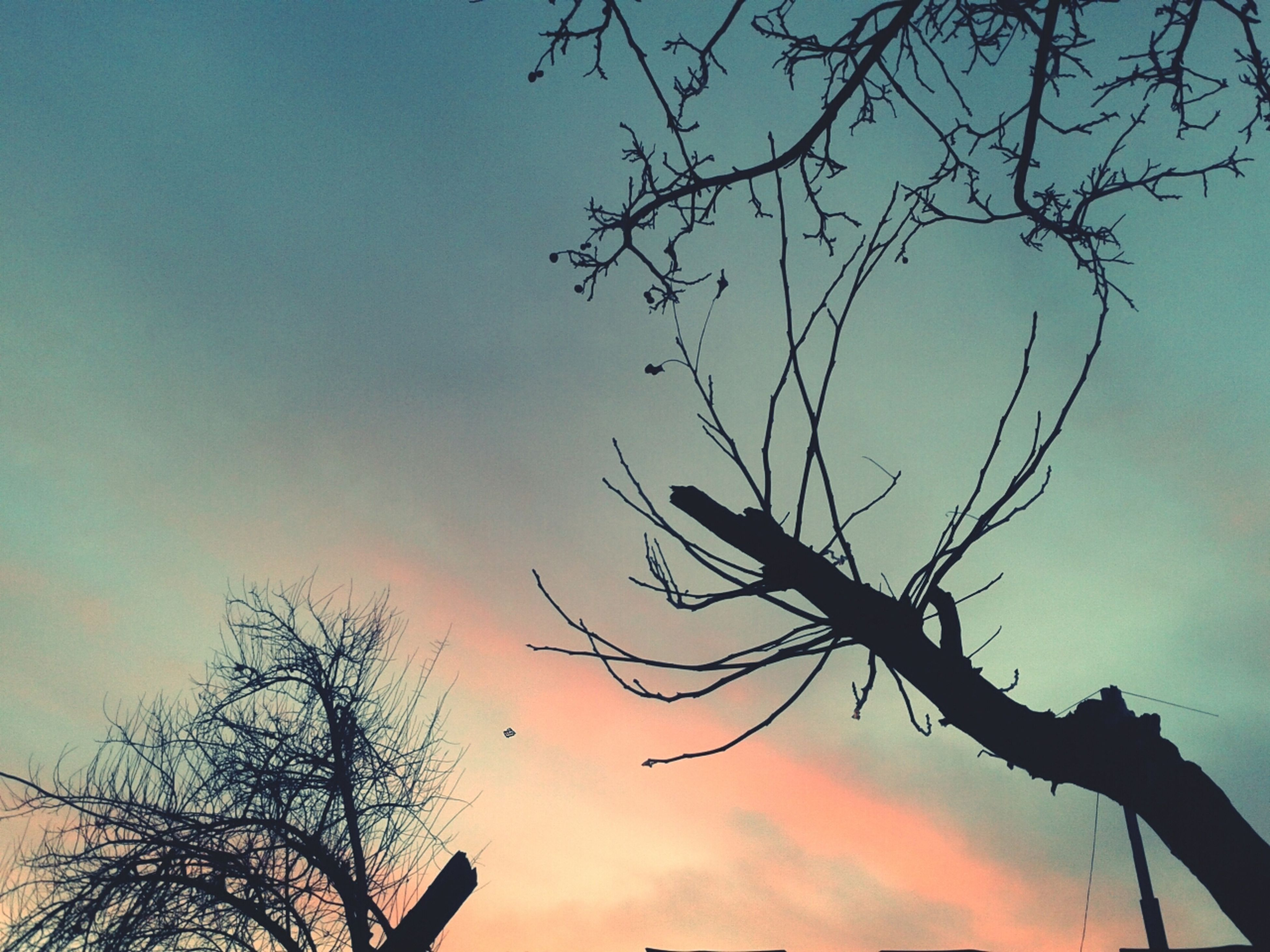 silhouette, bare tree, sunset, low angle view, branch, tree, sky, tranquility, beauty in nature, scenics, nature, orange color, cloud - sky, tranquil scene, idyllic, dusk, outdoors, cloud, no people, majestic