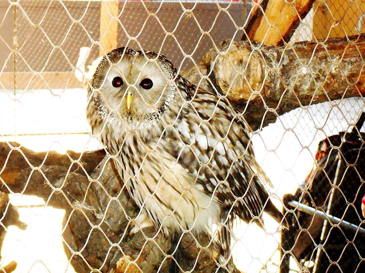 Beautiful stock photos of eule, Animal Themes, Animal Wildlife, Animals In The Wild, Bird