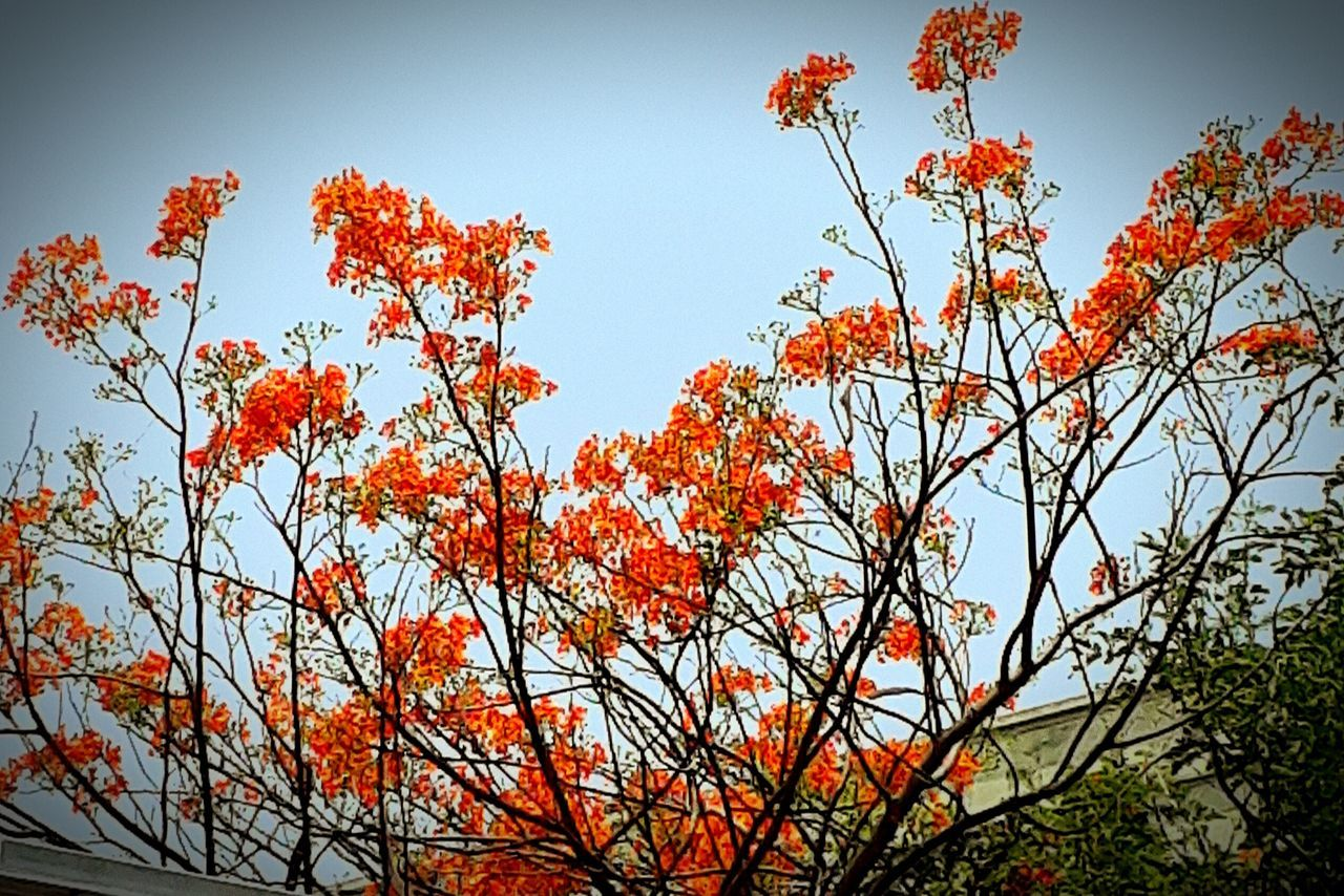 Beauty In Nature Flame Fragility Low Angle View Growth Tree City DayOut Afternoon Madness_trolled random pic