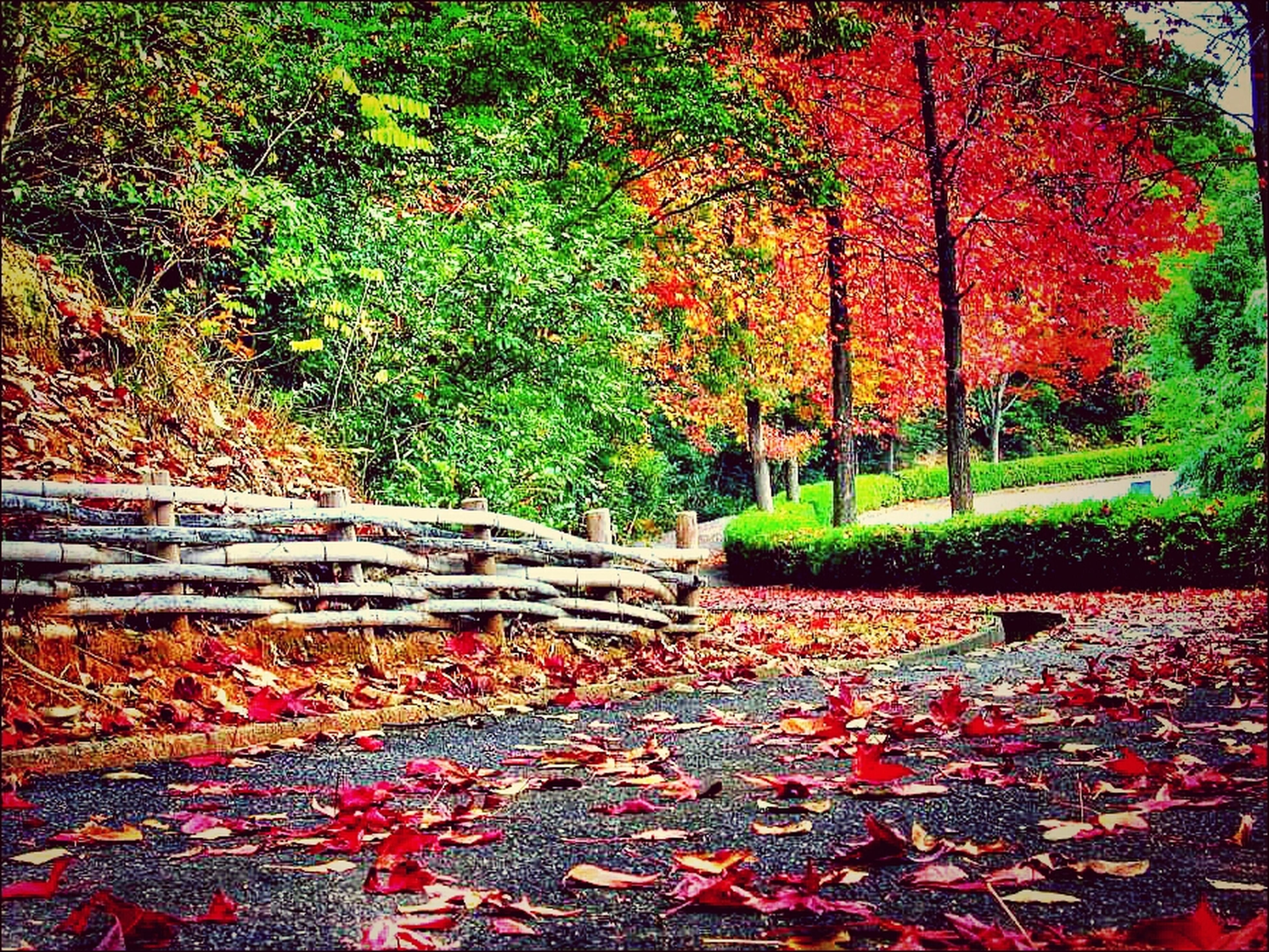 autumn, tree, change, season, park - man made space, red, leaf, fallen, nature, tranquility, bench, growth, park, beauty in nature, leaves, day, orange color, green color, outdoors, abundance