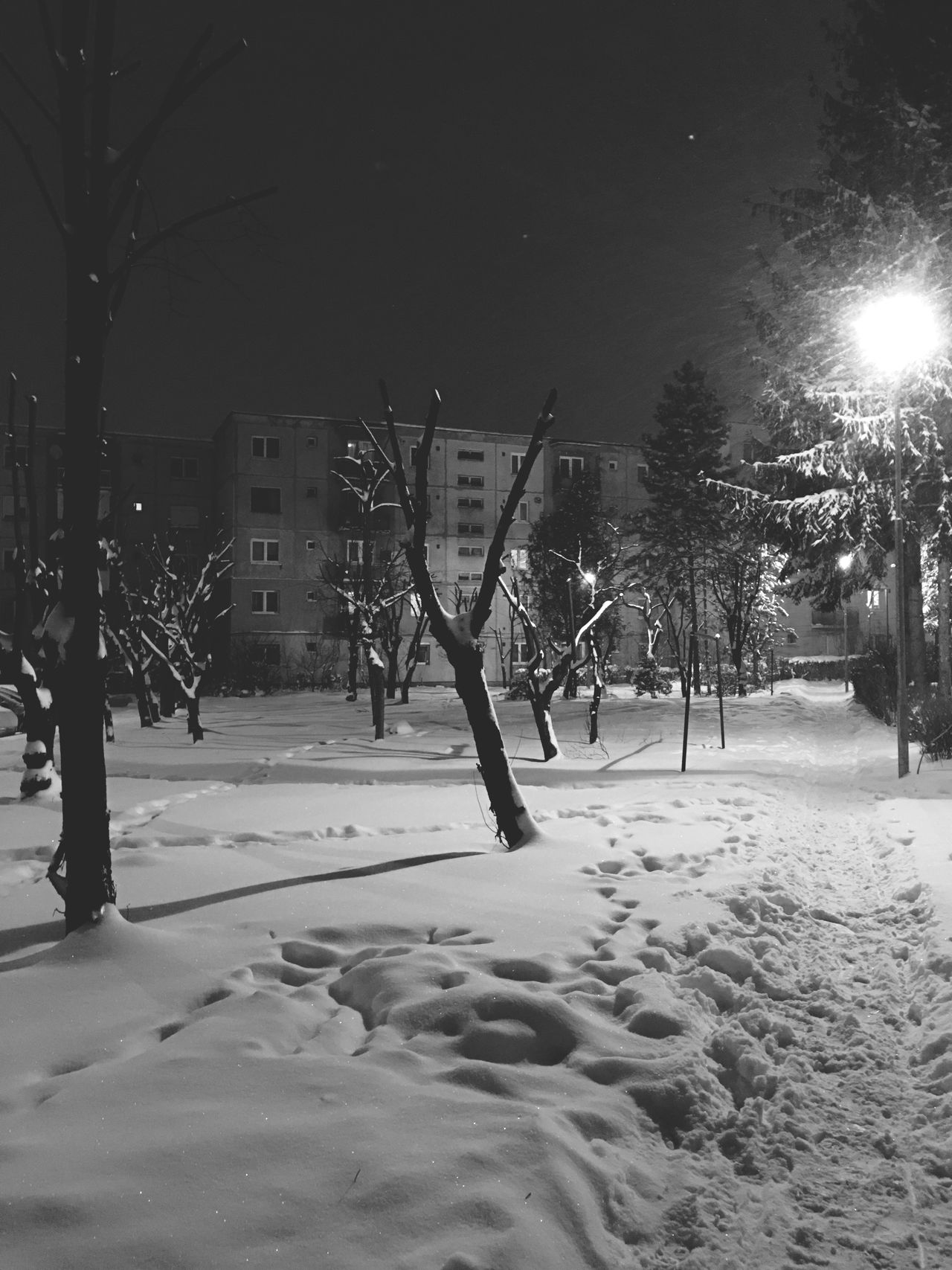 Winter Snow Cold Temperature Weather Tree Nature City Outdoors Building Exterior Day Snowing No People