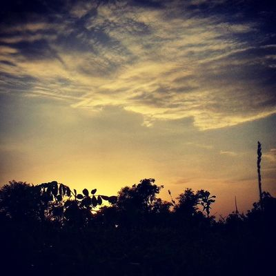 Garden Tree Greenery Sky Cloud Evening Perfect click Natural Galaxy Note-2 Clicked Very Cloudly Weather PicOfTheDay