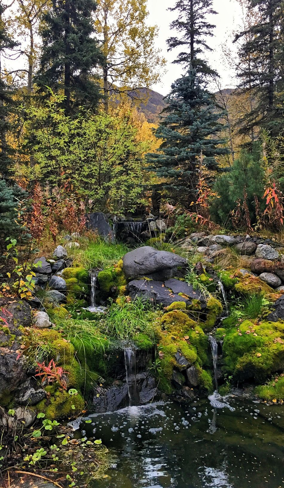 Peaceful Retreat Water Stream Forest Flowing Tree Scenics Tranquil Scene Tranquility Beauty In Nature Non-urban Scene Nature Stone - Object Growth Rock - Object WoodLand Flowing Water Plant Stone Day Branch Love The Colors Waterfalls Sitting Spot Reflect Fresh On Eyeem