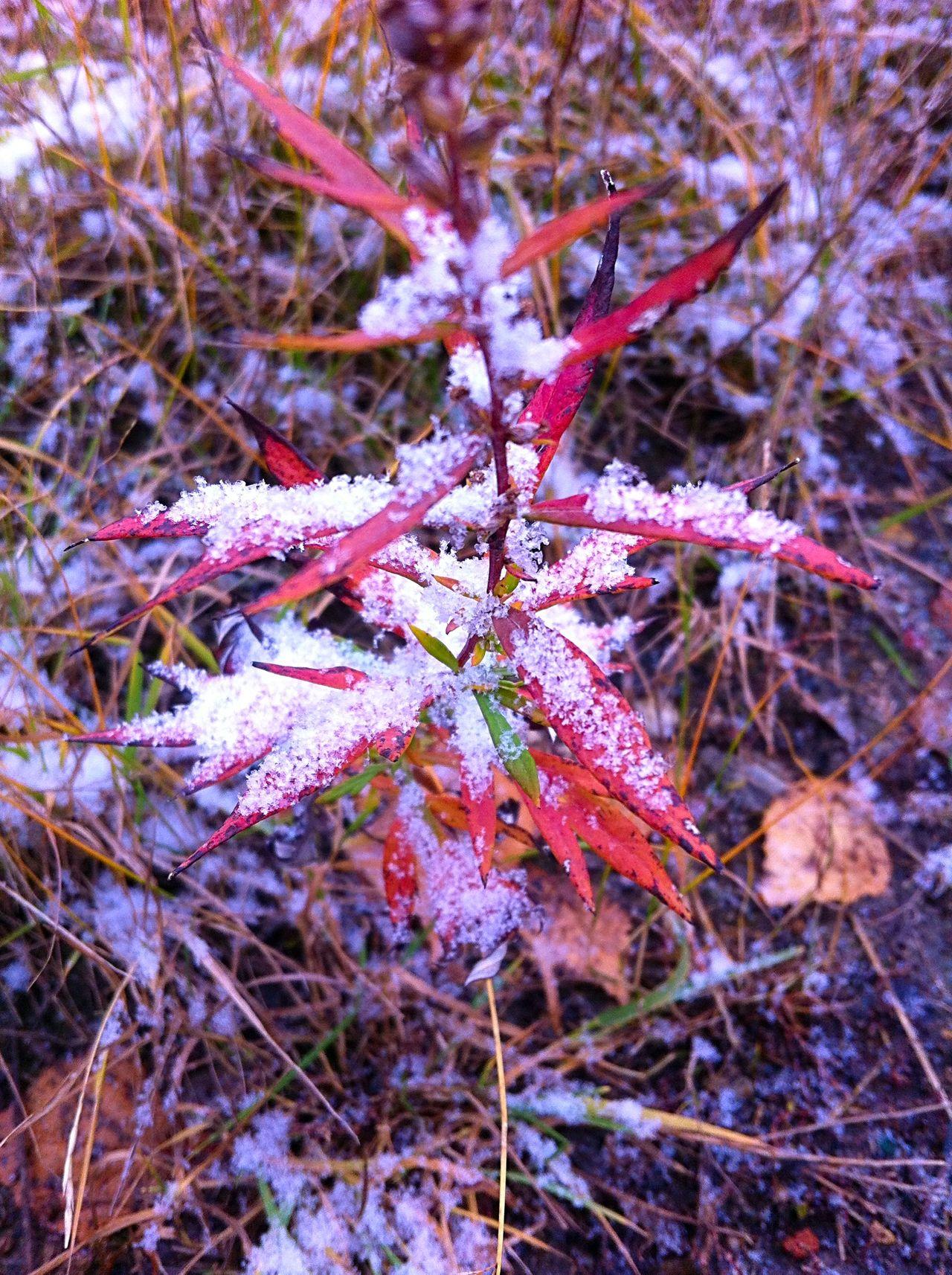 Grass Autumn Autumn Colors