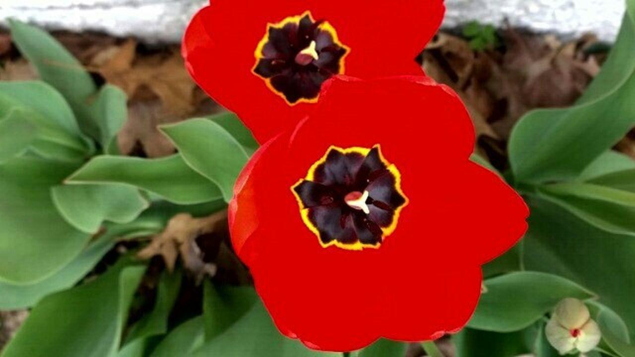 Photos Hi! Enjoying Life Flower Summer2014 Petals That's Me Taking Photos Flowers Minneapolis Redflowers Androidography Flowersedution Flowerlovers Flower Photography FlowerPortrait