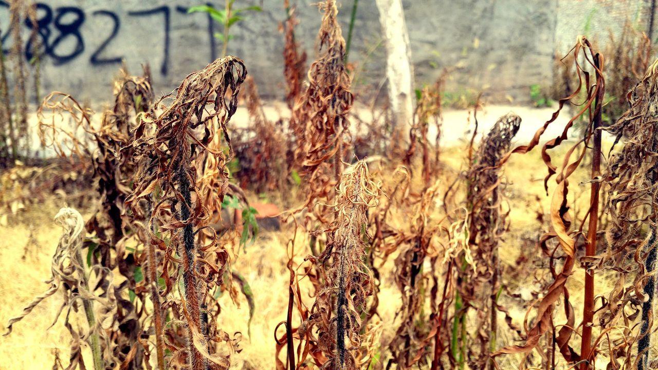 中国 China Sichuan Province Outdoors Shoot Your Life Life Nobody No People Nature Die Glass Dead Plant Brown Still Life