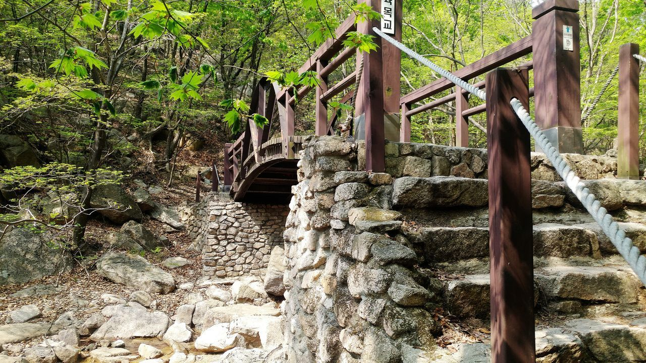 railing, tree, no people, day, bridge - man made structure, steps and staircases, steps, outdoors, built structure, nature, architecture
