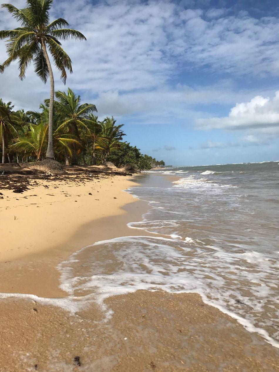 Dominican Republic Dominican Republic Beach Ocean Ocean View Palm Tree Sand Sea Seascape Seaside Scenics Tranquility Cloud - Sky Cloud