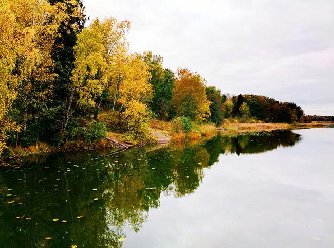 Höstfarsta. Autumn Fall Autumn Colors Fall Colors Lake Autumn Leaves