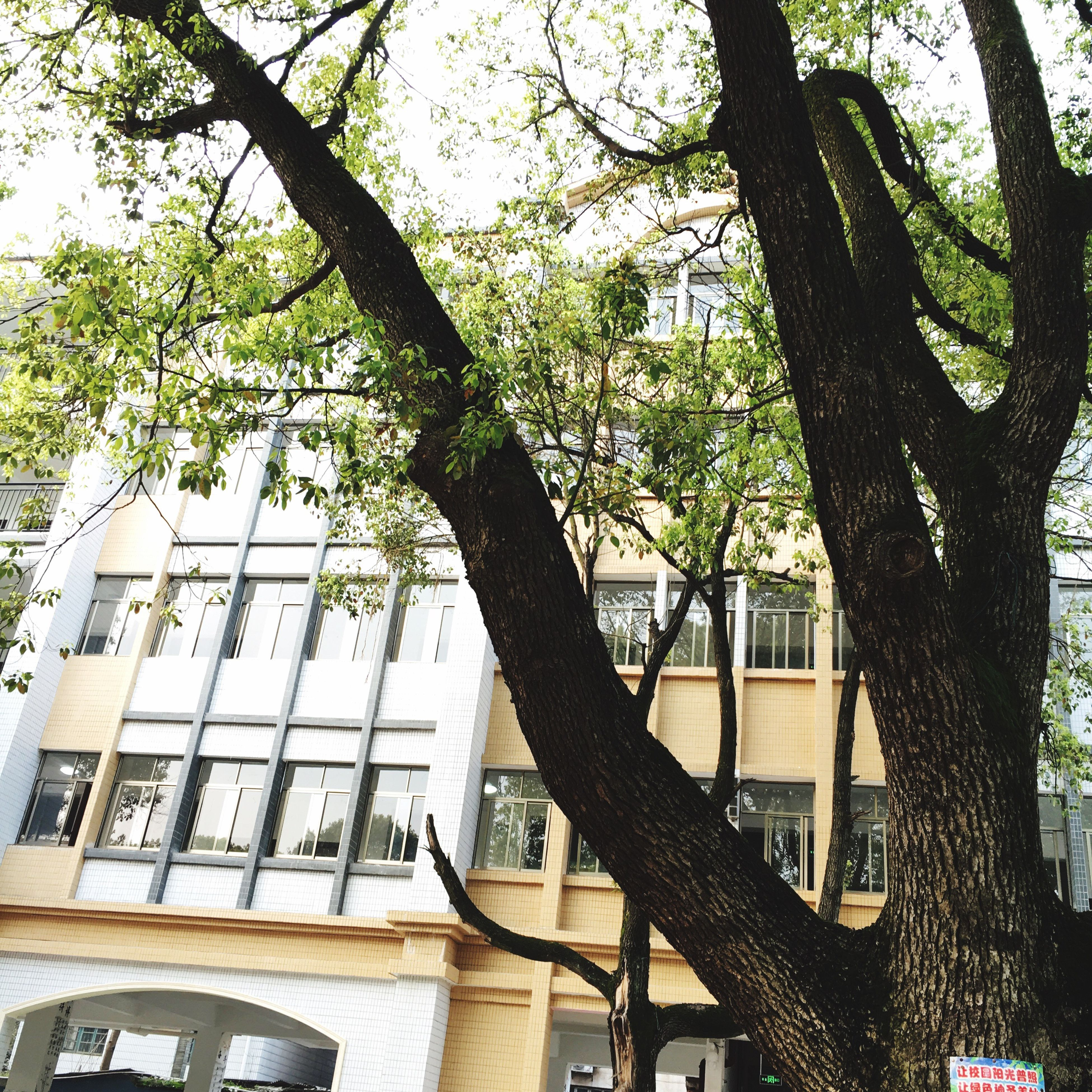 building exterior, architecture, tree, built structure, branch, window, low angle view, residential building, tree trunk, building, residential structure, city, house, growth, day, bare tree, outdoors, sunlight, balcony, no people