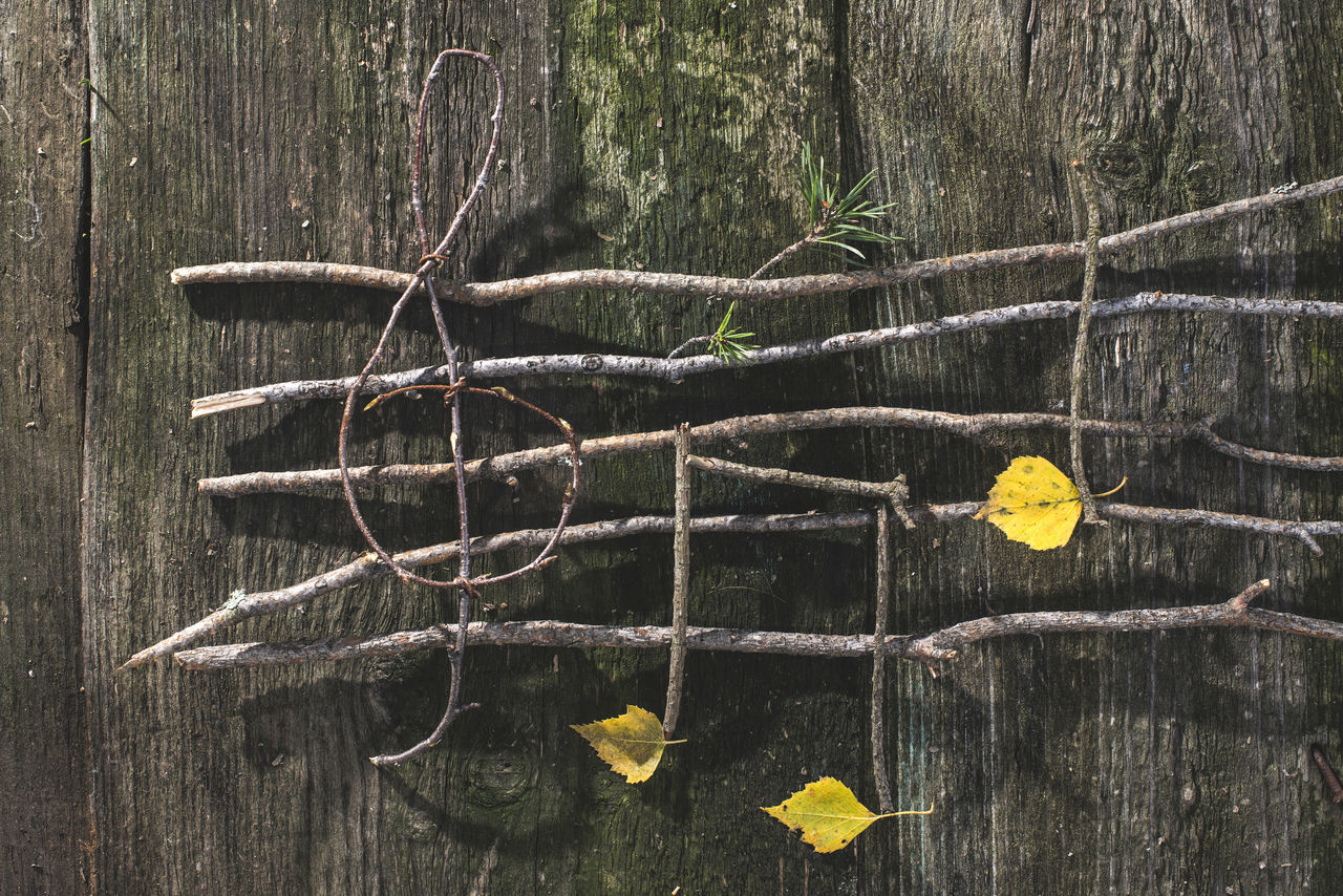 Branch Broken Dirty Dry Fence Forest Geometry Grass Green Green Color Growing Growth Leaf No People Plant Safety Stem Tree Trunk Twig