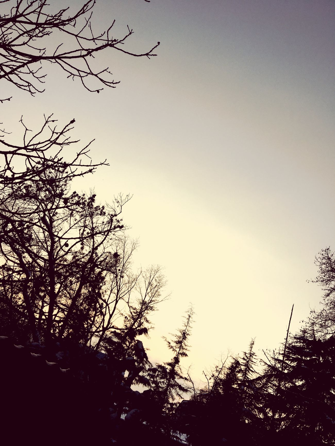 Winter Nature Trees