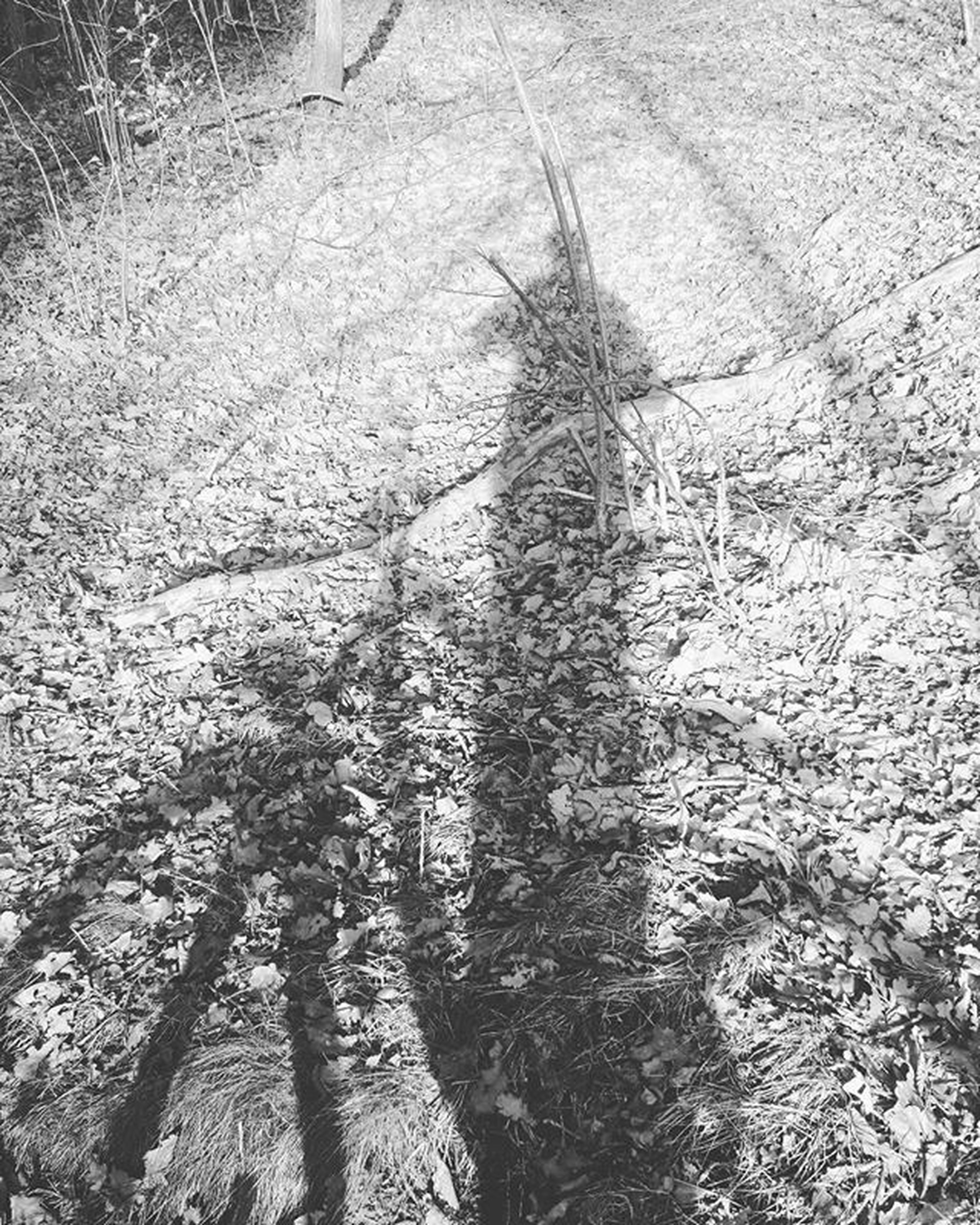 high angle view, shadow, sunlight, day, textured, nature, street, focus on shadow, outdoors, road, tree trunk, tree, no people, puddle, winter, footprint, tranquility, unrecognizable person, sand, snow