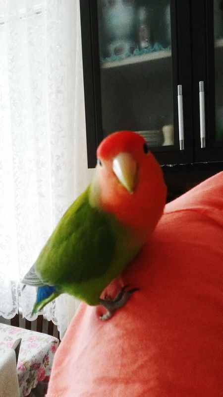 Bücür the Agressive. Bird Parrot Animal Check This Out Enjoying Life Hi! Colorful Cute Cute Pets