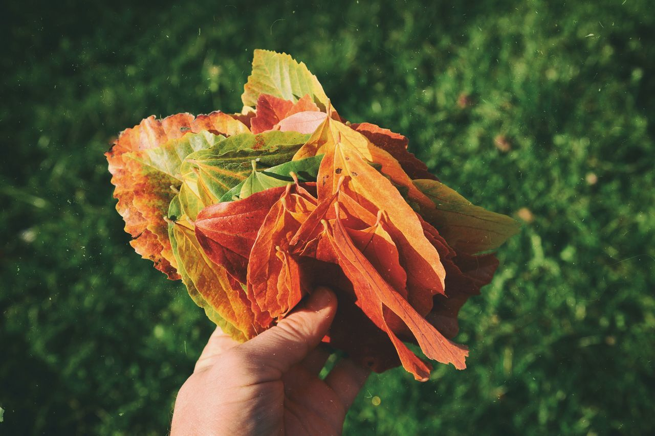Human Hand Close-up Orange Color Holding Nature Freshness Lonlyness Sadness Maximun Closeness EyeEm Gallery Light And Shadow Our Best Pics Autumn Autumn Leaves Autumn Colors Autumn Collection Autumn Leafs Leafs Outdoors Nik Collection VSCO Retro Oldschool Lomography Beautifully Organized EyeEm Diversity Art Is Everywhere